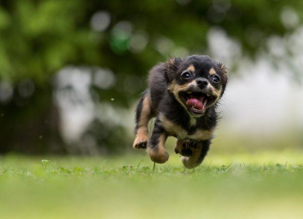 飼い主に飛びついてくる犬の理由は?そのしつけ方法