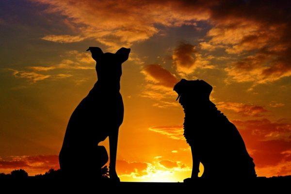 虹の橋:愛犬は決してあなたのこと忘れません