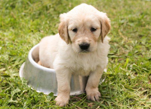 犬のおやつと添加物について。野菜を使った手作りおやつをご紹介
