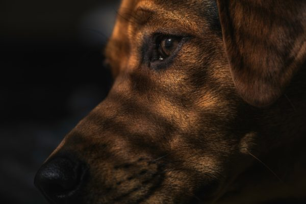 愛犬の認知症(痴呆) の対処法と予防法|犬の高齢化と介護