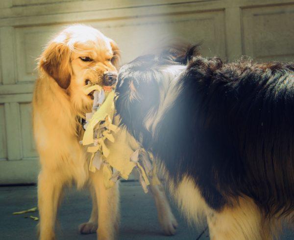 忘れていませんか?犬の狂犬病、その恐ろしさ|ワクチンと予防法